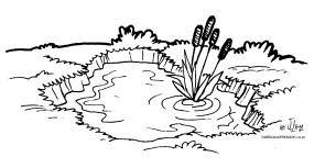 desenho colorir lago brejo