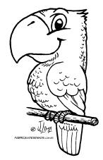 desenho colorir papagaio loro